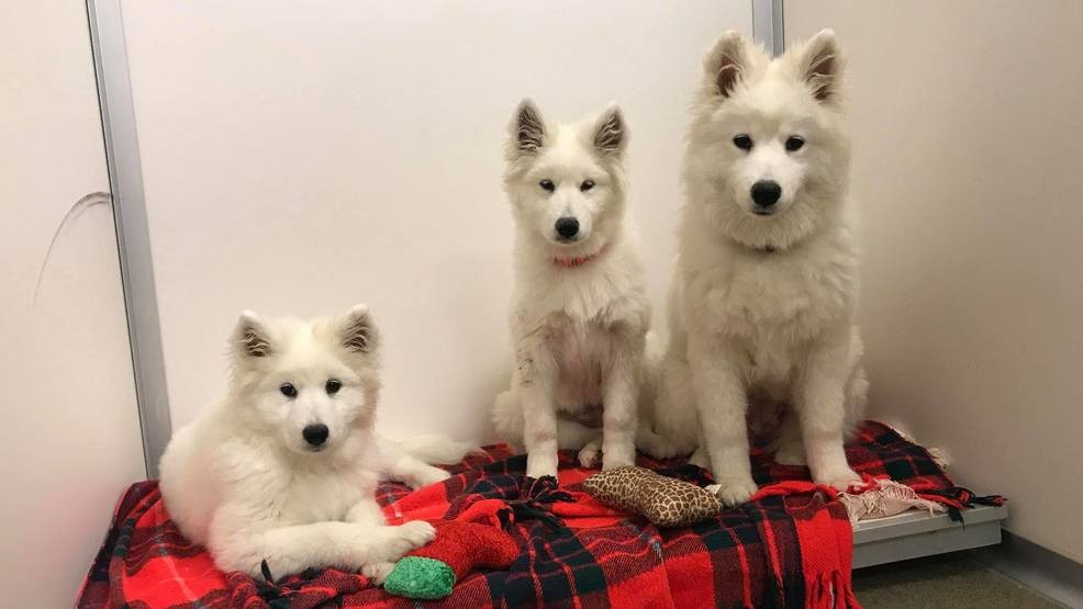 NHS: All puppy mill dogs adopted from Humane Society | KPTM